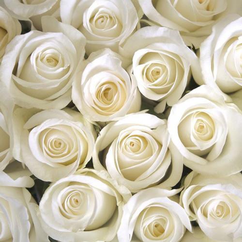 One Dozen Ivory Roses