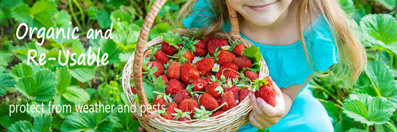 Organic pest protection from rabbits, grasshoppers, insects, and more. Grow organic strawberries, organic lettuce, organic tomatoes with this non-pesticide solution to common pests.