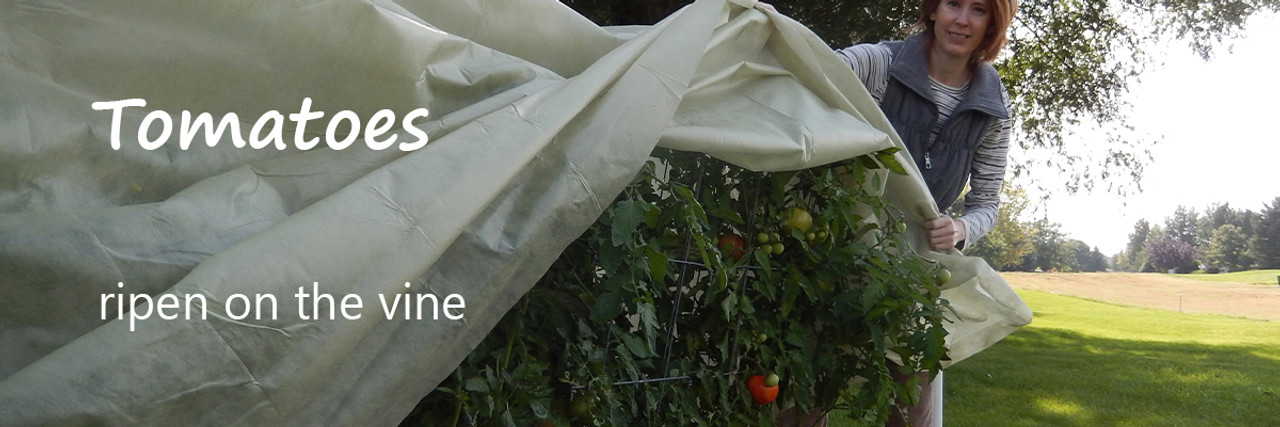 Insulate plants to protect them from an early cold spell