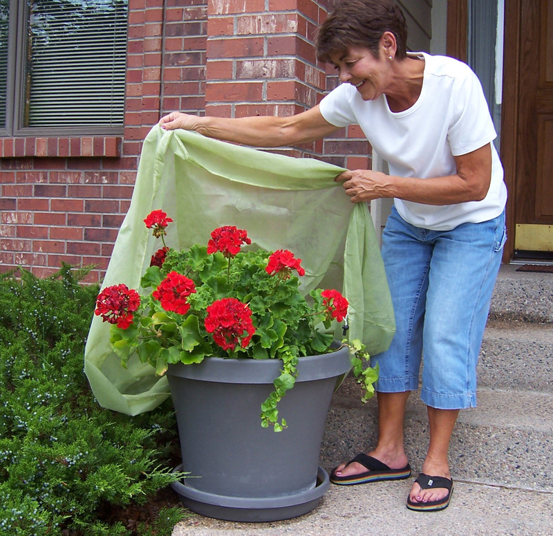 Container Junior Cover is designed to protect container plantings. It works just as well   for in-ground plants and fits plants up to 2.5 feet tall.