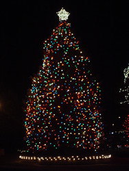 Walnut Creek Annual Christmas Tree Lighting - November 13, 2020