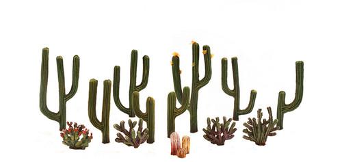 Cactus Plants 13/