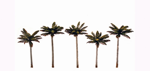 Palm Trees Small 5/