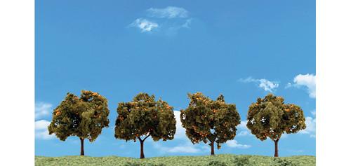 """Orange Tree 2""""-3"""" 4/"""