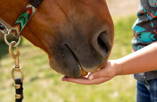 Equine All Natural CBD Calming Supplement Biscuits