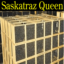 2 pound Saskatraz honey packaged bees queen honey bee packages Iowa Minnesota Missouri Nebraska South Dakota North Dakota Wisconsin Illinois Kansas
