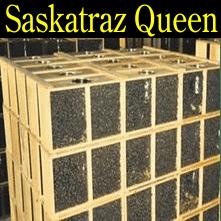 3 pound Saskatraz honey packaged bees queen honey bee packages Iowa Minnesota Missouri Nebraska South Dakota North Dakota Wisconsin Illinois Kansas