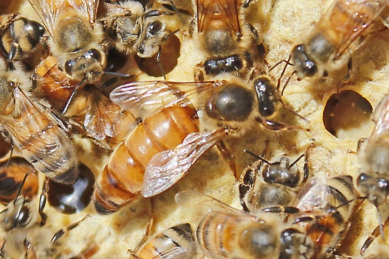 United States USA online listings for free shipping company supplier of honey bee beginning beekeeping supplies, Langstroth bee hives, beekeeping supplies for sale anywhere in listings around Mississippi MS 386 387 388 389 390 391 392 393 394 395 396 397 | United States USA online listings for free shipping company supplier of honey bee beginning beekeeping supplies, Langstroth bee hives, beekeeping supplies for sale anywhere in listings around Hawaii HI 967 968 | United States USA online listings for free shipping company supplier of honey bee beginning beekeeping supplies, Langstroth bee hives, beekeeping supplies for sale anywhere in listings around Virginia VA 201 220 221 222 223 224 225 226 227 228 229 230 231 232 233 234 235 236 237 238 239 240 241 242 243 244 245 246 247 248 249 250 251 252 253 254 255 256 257 258 259 260 261 262 263 264 265 266 267 268