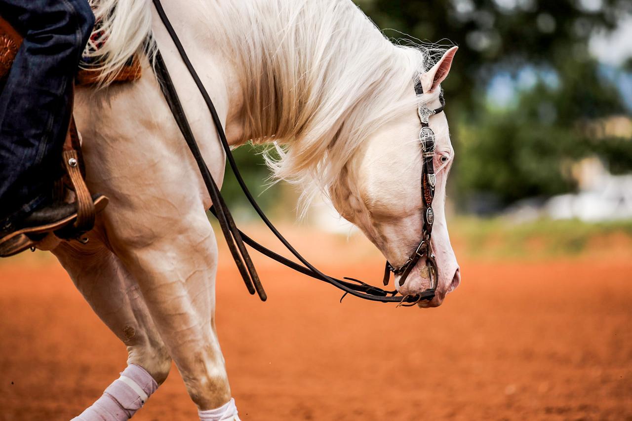 Achieving Optimal GI Health in Performance Horses