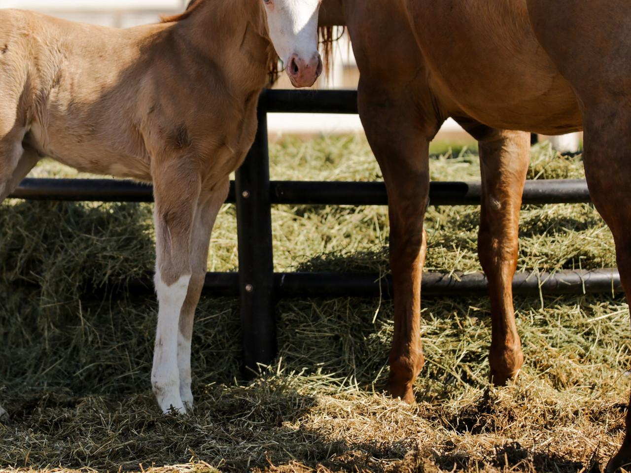 Alfalfa: Friend or Foe?