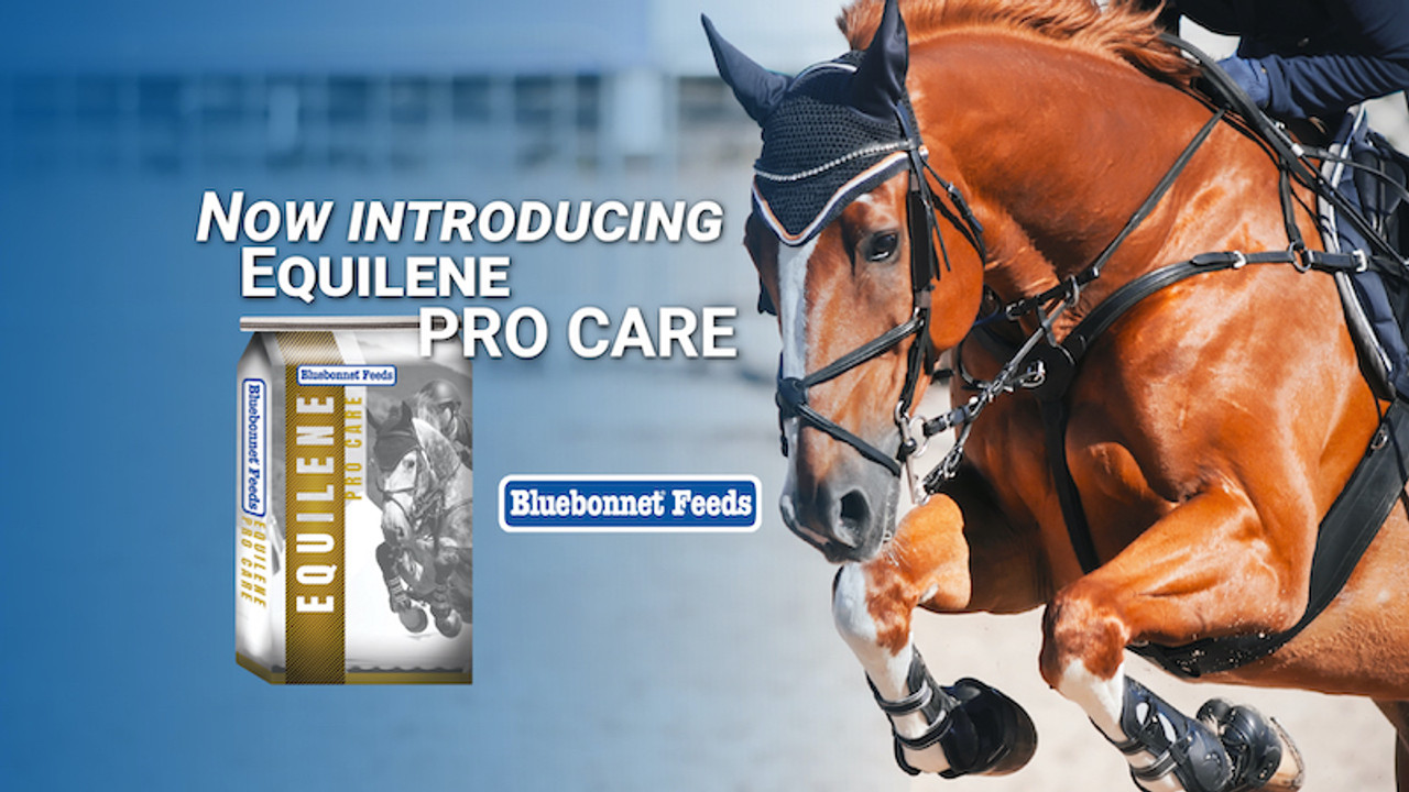 Equilene Pro Care