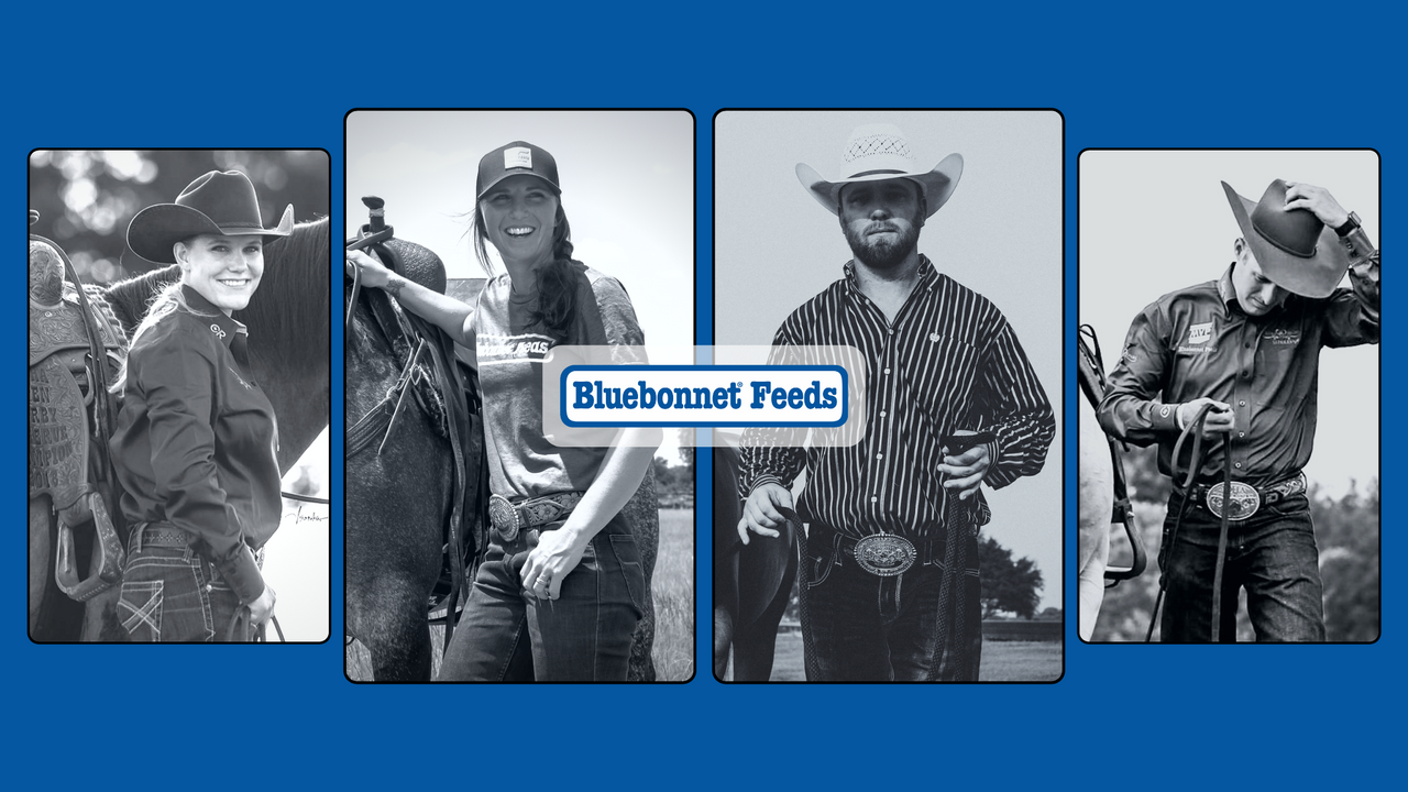 No Gambling Allowed: Watch Bluebonnet Feeds in Action when these 2 Cow Horse Stars Head Down the Fence in Vegas