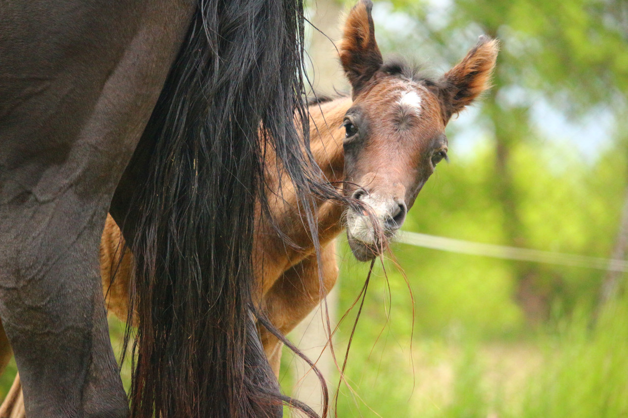Foal Care and Feeding
