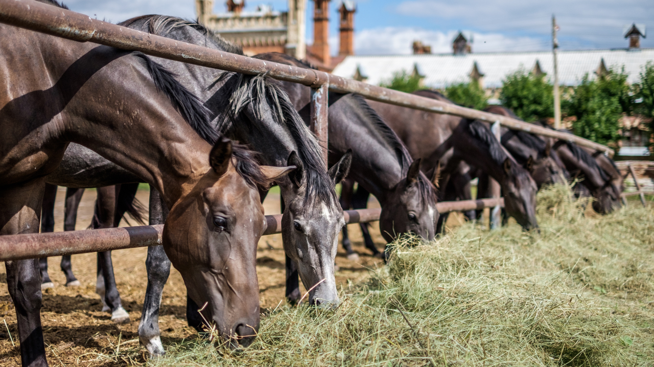 5 Considerations for your Horse when Facing Hay Shortages