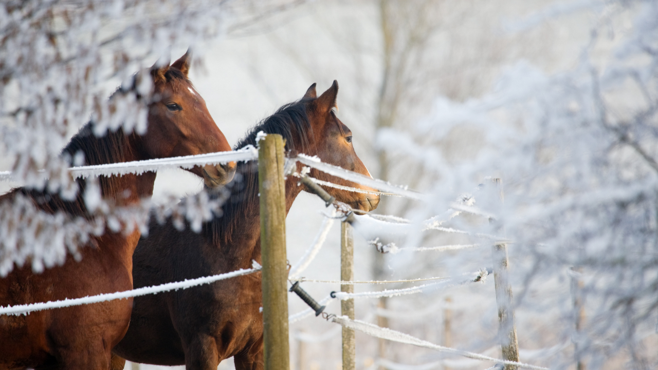 Top Ways to Keep Horses Warm in the Winter
