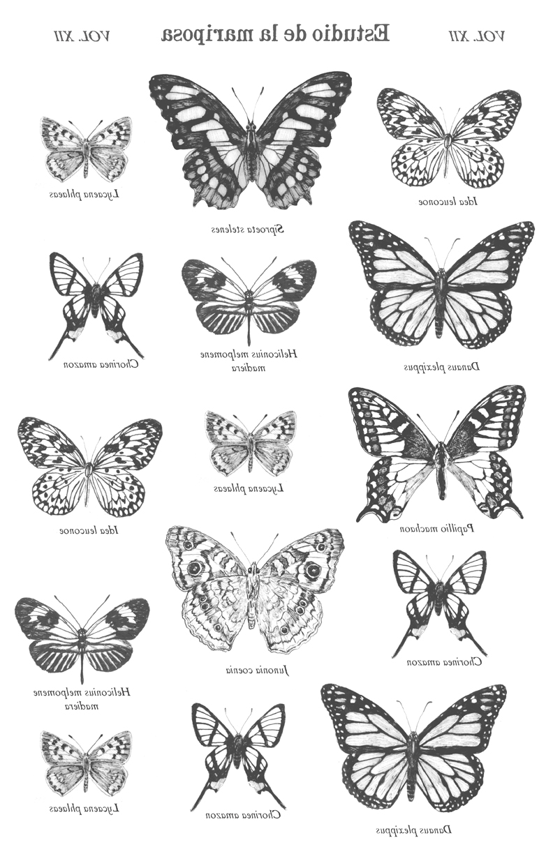 "Butterfly Study Image Transfer Paper - B & W 16"" x 10.5"""