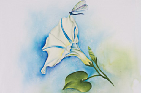 Morning Glory Dragonfly - E-Packet - Debra Welty