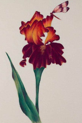 Sunset Iris Fabric Painting - E-Packet - Debra Welty
