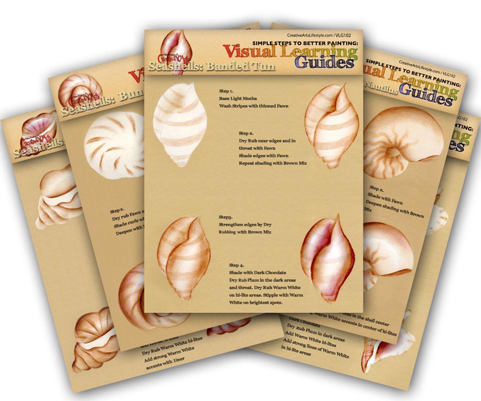 Visual Learning Guide: Seashells