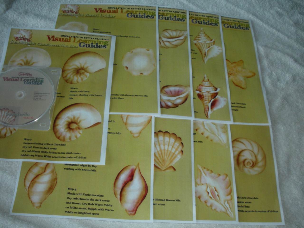 Visual Learning Guide + DVD: Seashells