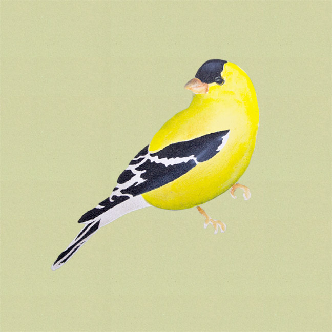 American Goldfinch Pattern Packet - Patricia Rawlinson