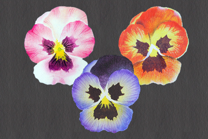 Easy Elegant Pansies Pattern Packet - Patricia Rawlinson