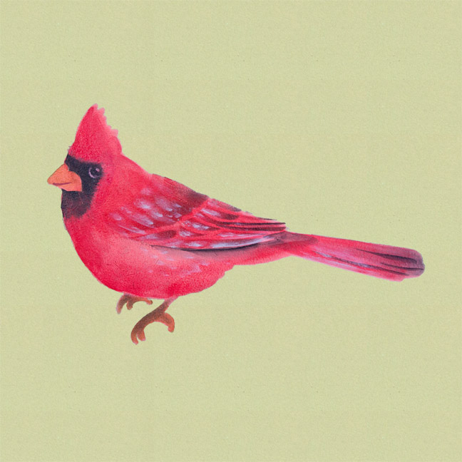 Simple Stenciled Songbirds Cardinal - E-Packet - Patricia Rawlinson