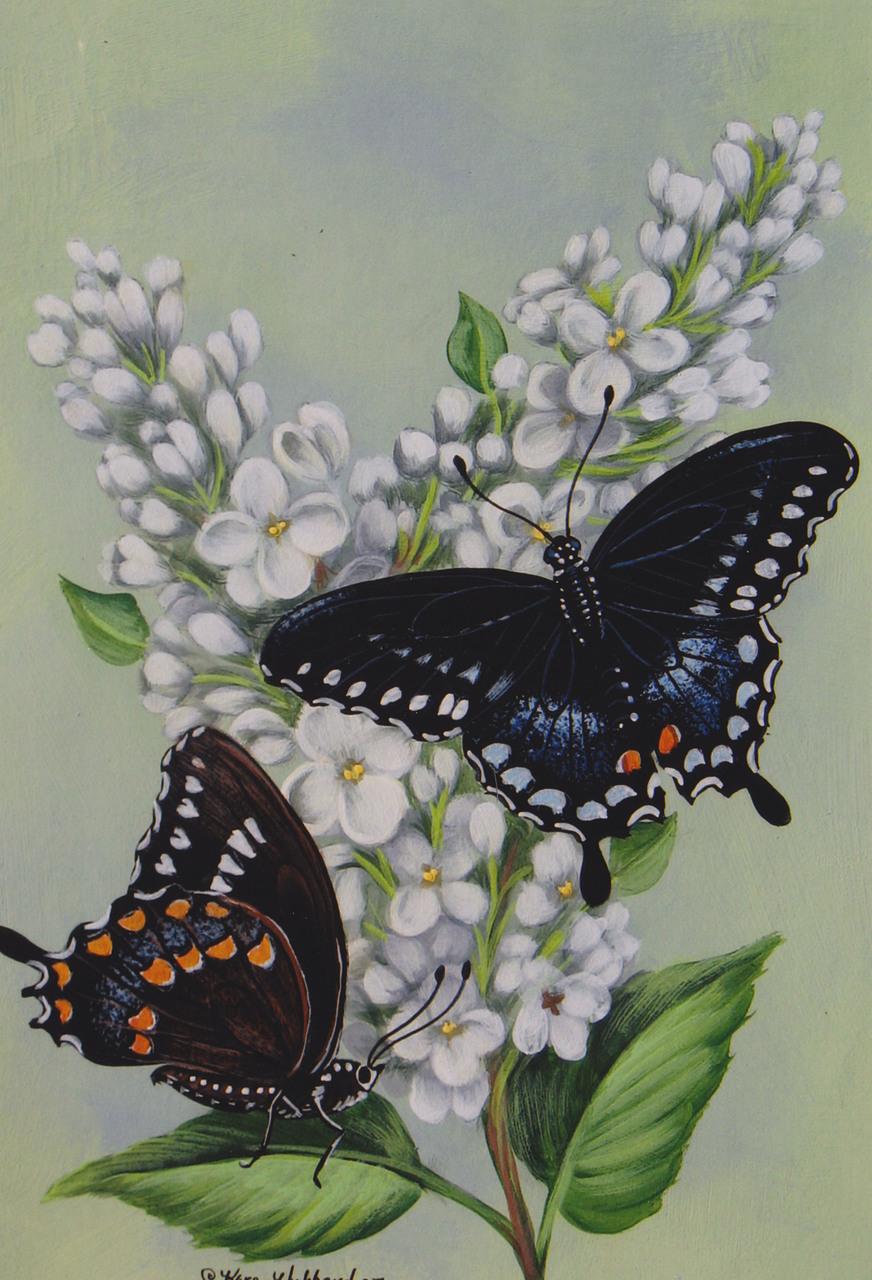 Spicebush Swallowtail & Lilacs - E-Packet - Karen Hubbard