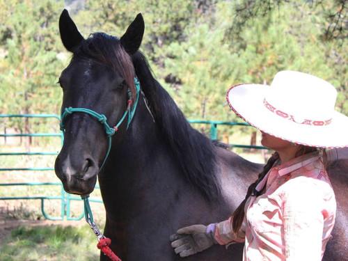 Mustang Training Halter (Wild Horse Outreach Advocacy - Stefanie Skidmore)