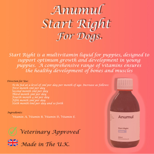 Anumul Start Right Multivitamin For Puppies to Support Early Growth Close up
