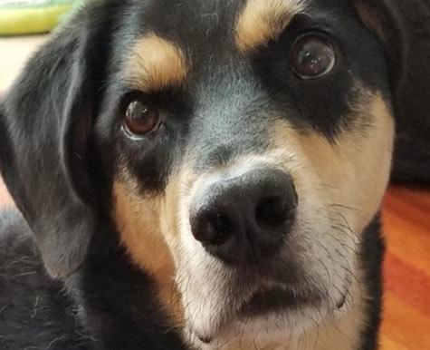 Reviews - Kane The Dog With Lipomas - NHV Natural Pet