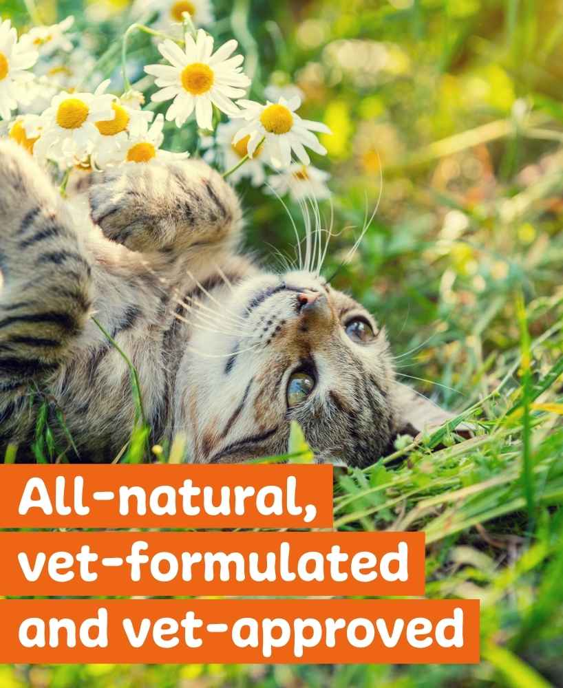 get a customized nutrition plan for your cat
