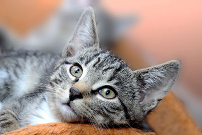 cat remedies for health problems by condition