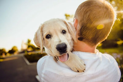Caring for dog health problems