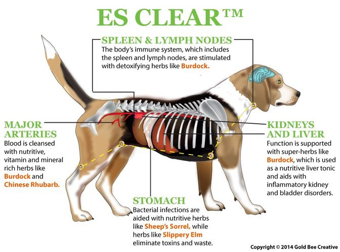 es-clear-dog-diagram-op.jpg