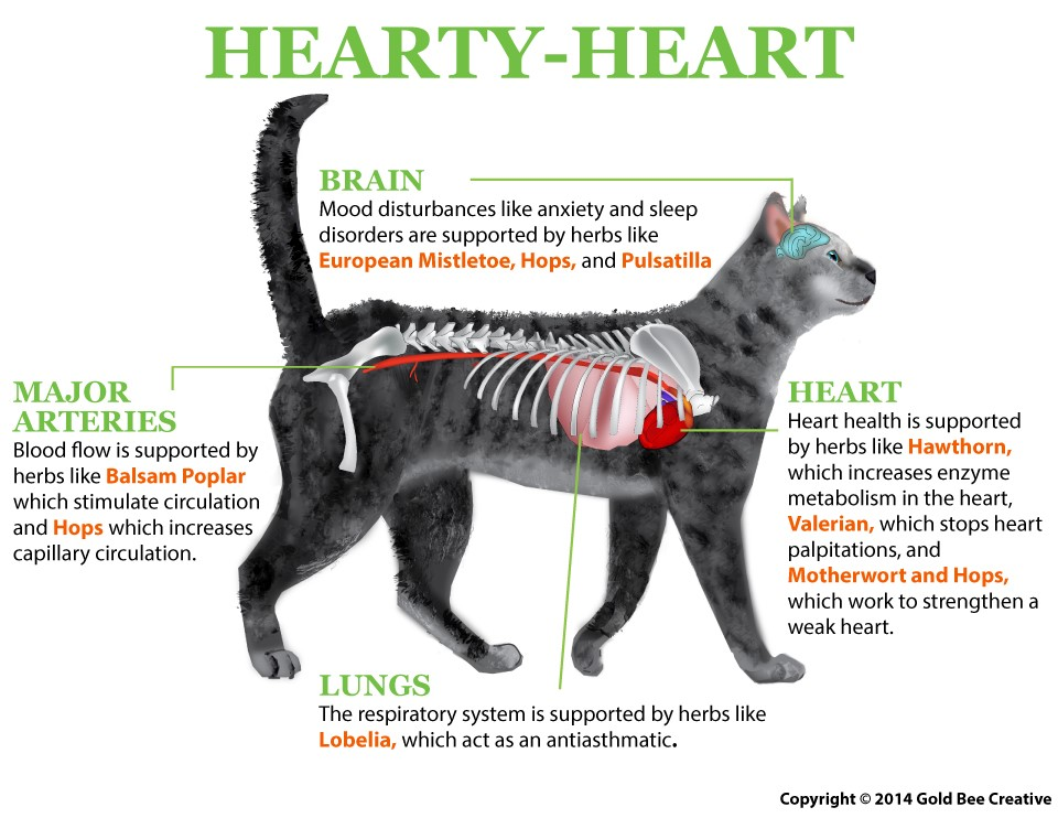 Hearty Heart for cats