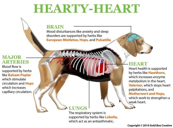 hearty-heart-dog-illustration-op.jpg