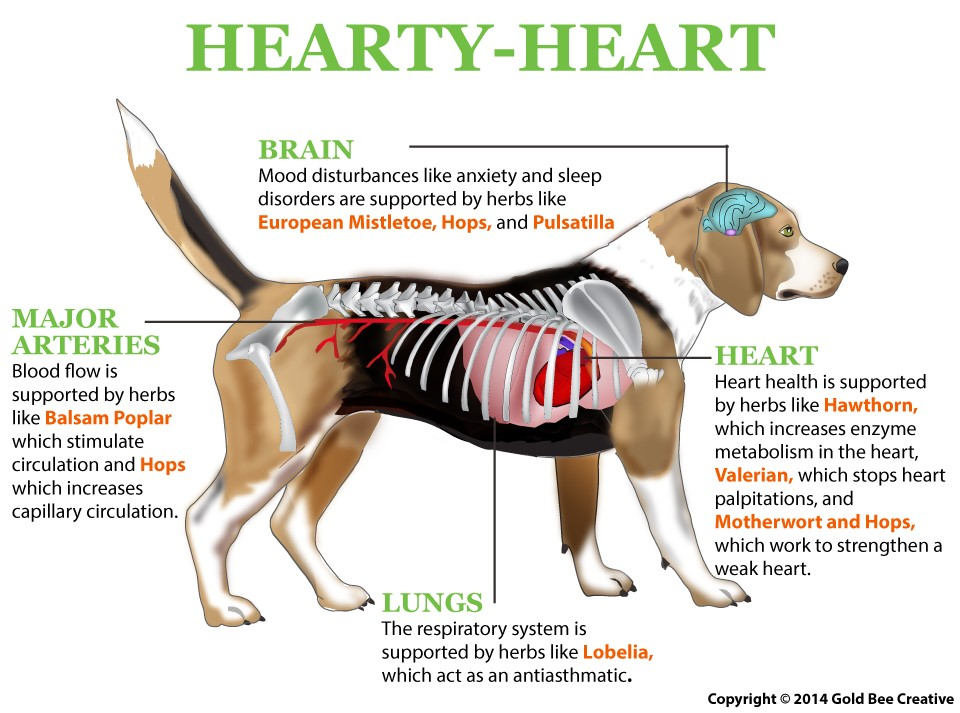 Hearty Heart for dogs