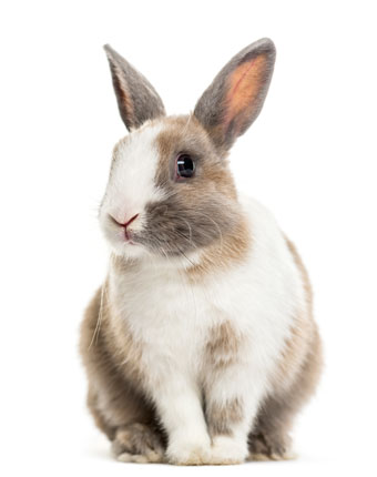 herbal remedies for rabbits