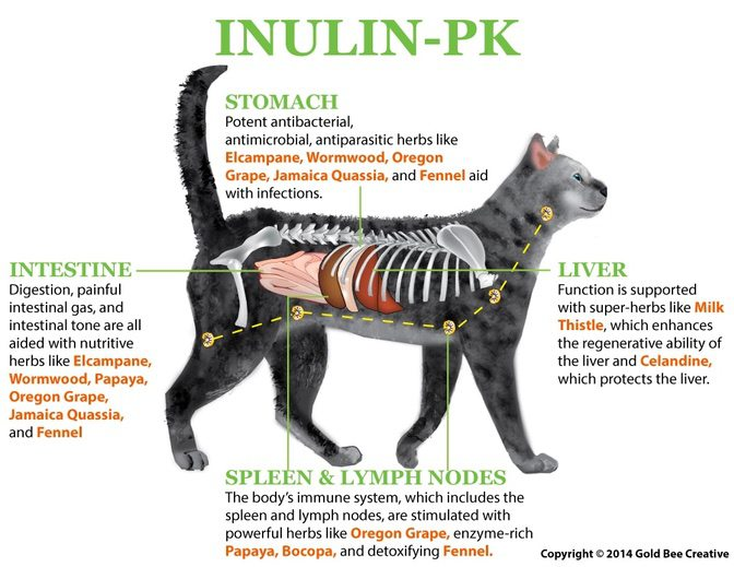 Cat's Insulin PK fuctioning