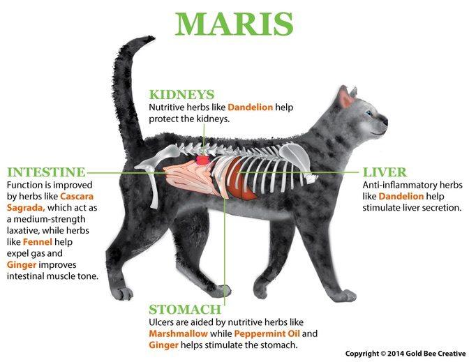 maris-cat-diagram-op.jpg