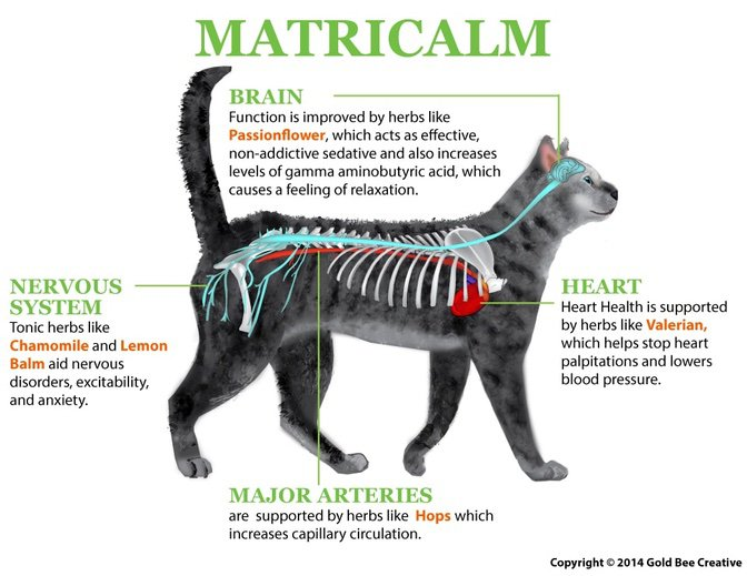 Matricalm for cats