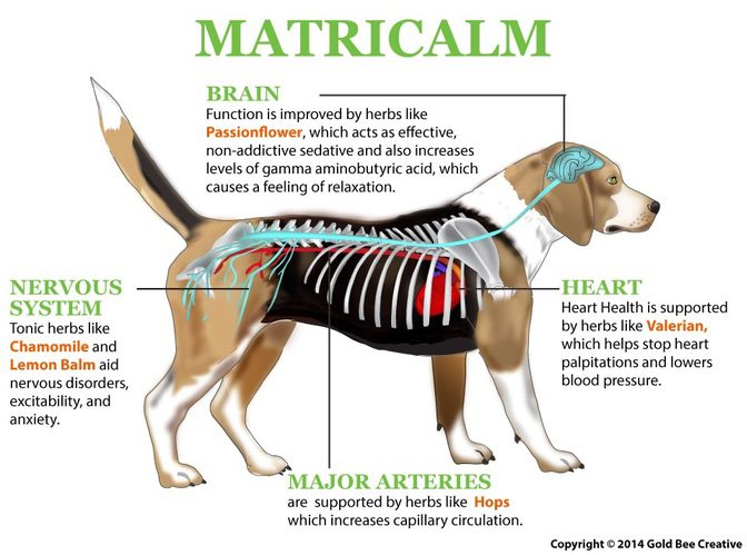 Matricalm For Aggression In Dogs