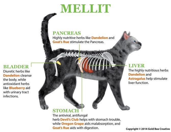 mellit-cat-diagram-op.jpg
