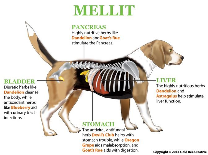 Mellit for dogs with diabetes