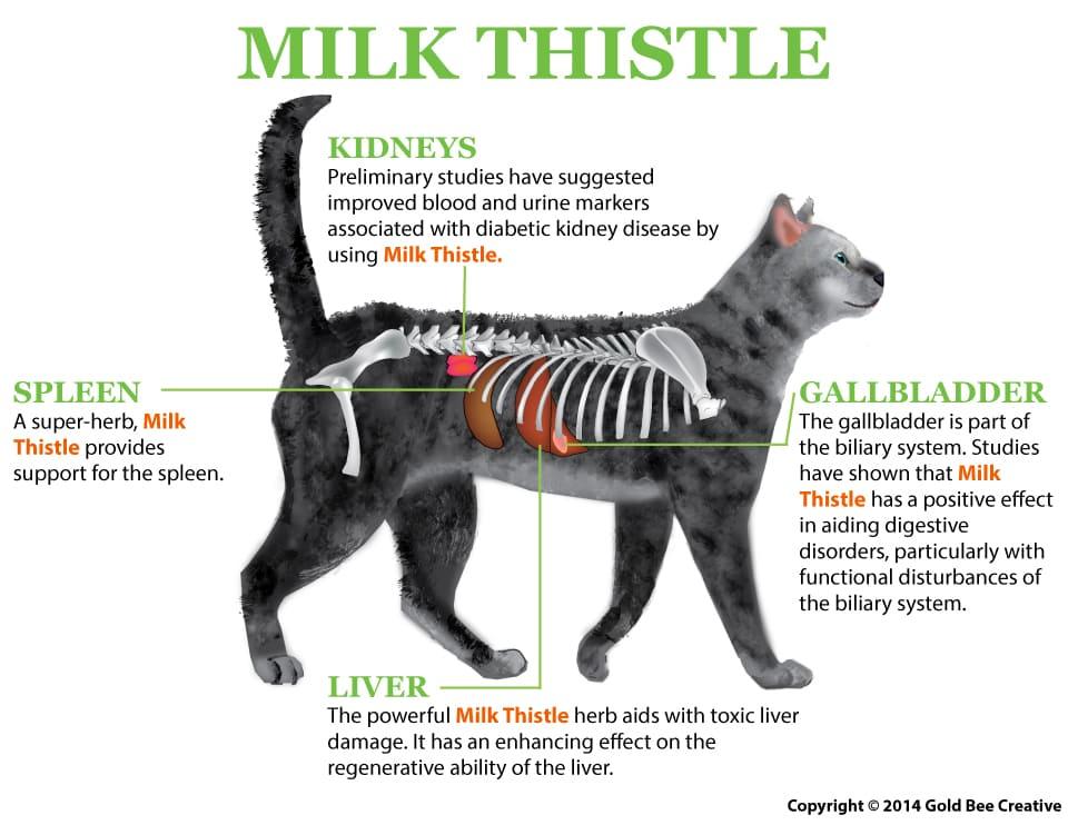 milk thistle cat illustration