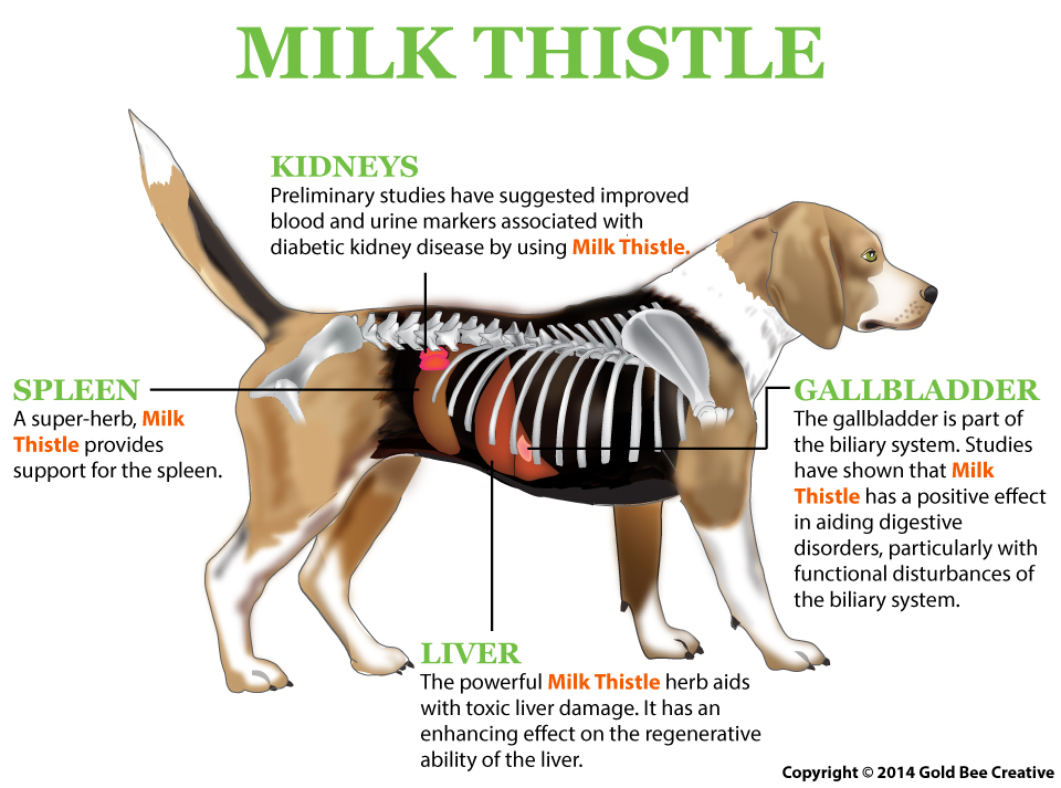 milk thistle dog illustration