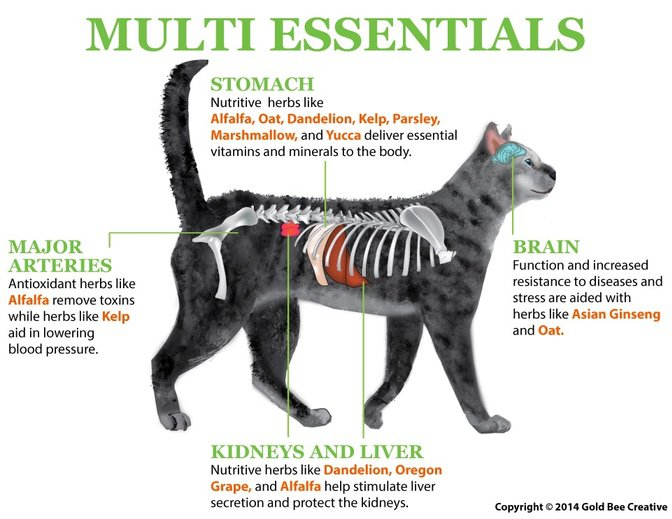 Multi Essentials Cat Vitamins