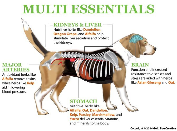 Multi Essentials Dog Vitamins