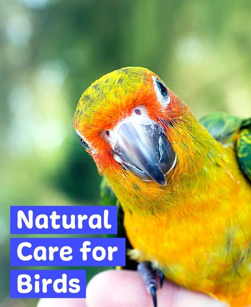 herbal remedies for birds